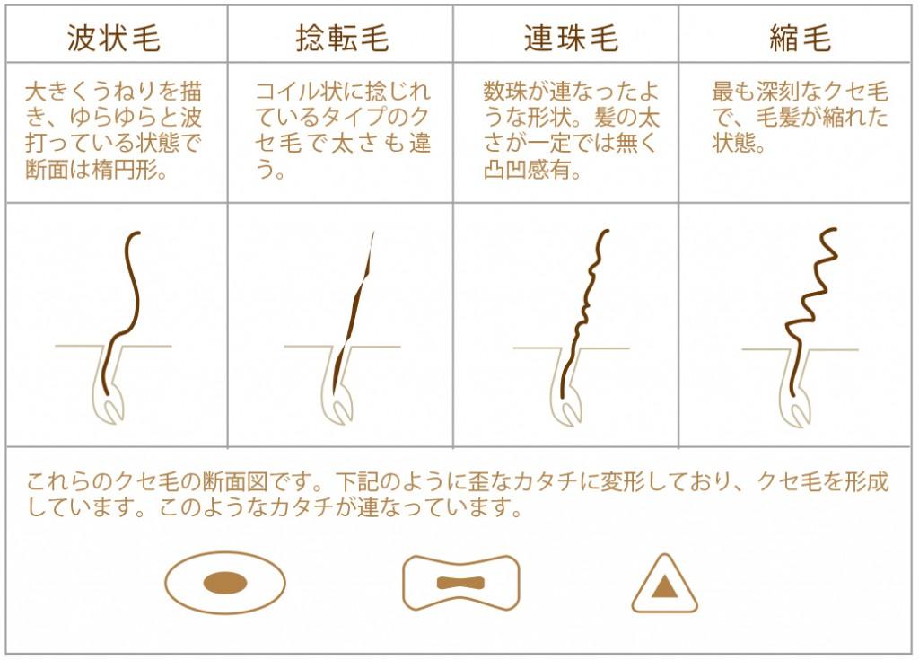 縮毛の種類